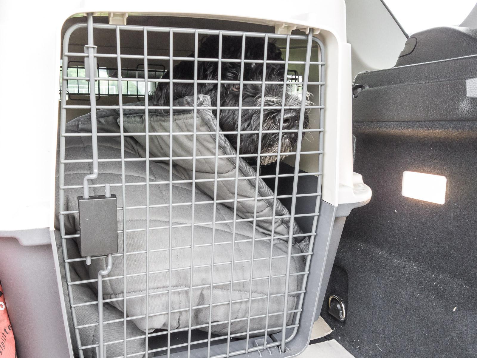 Hundebox: Künstliche Verknappung