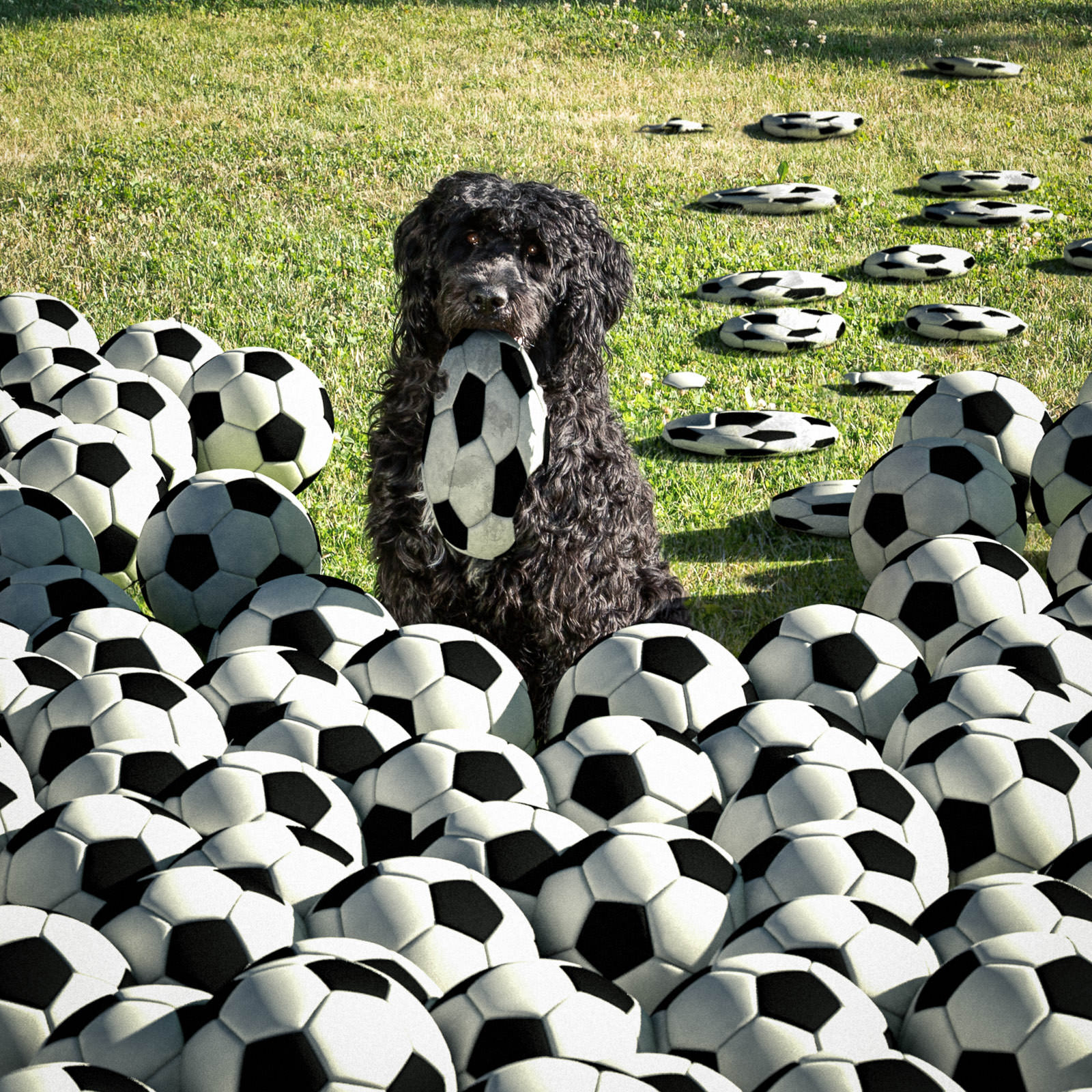 WM-Hund